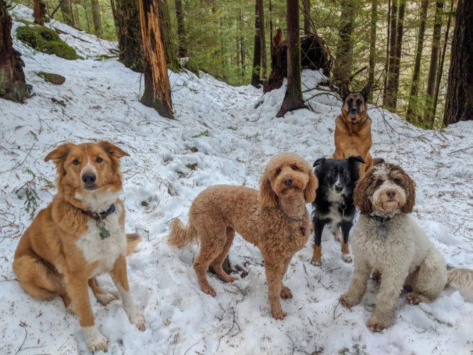 Group Dog Training in Squamish