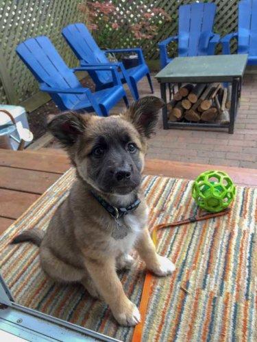 Puppy Training in Squamish