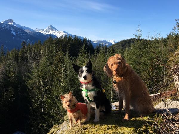 Dog Training for Squamish Active Outdoor Lifestyle