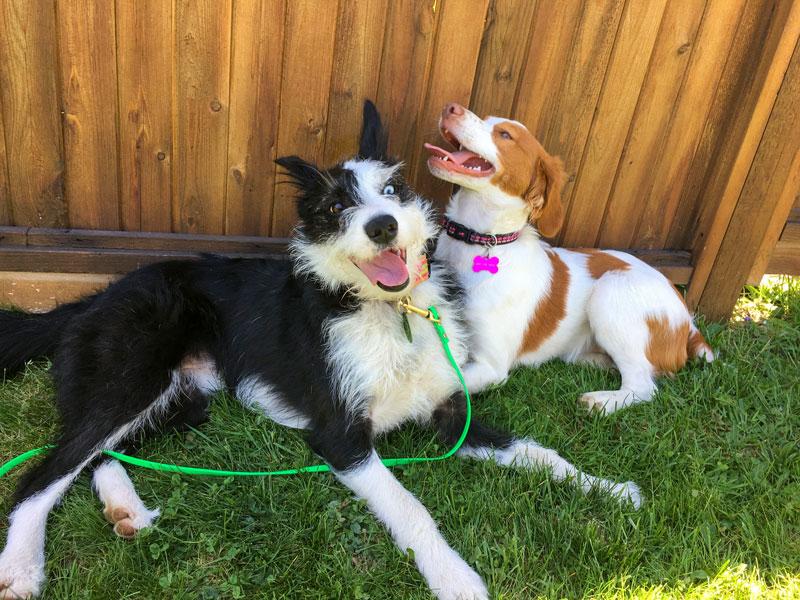 Dog - Dog meet & greets